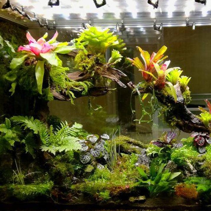 terarii plante tropicale